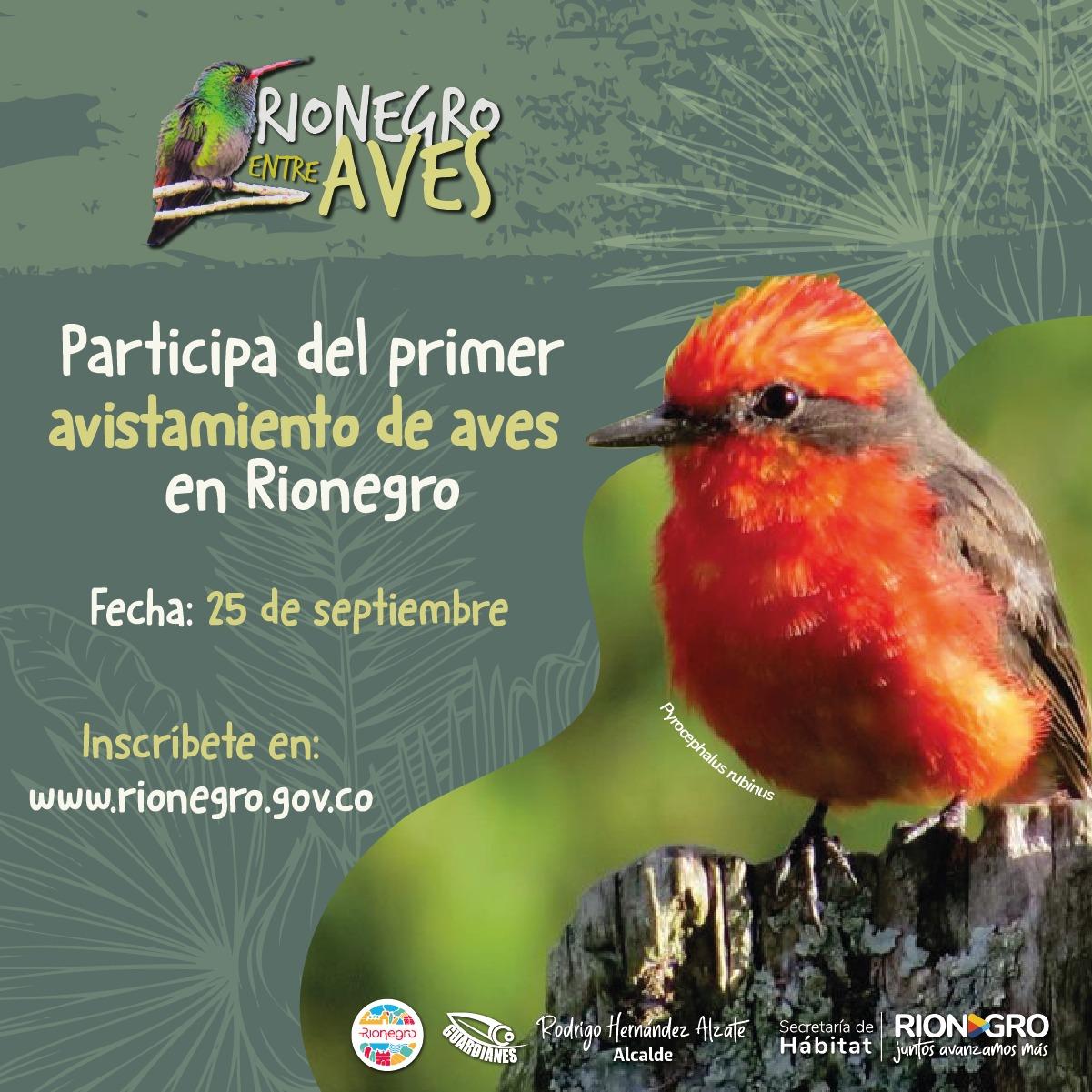 Se abre inscripción para el Primer Avistamiento de Aves en Rionegro